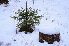 Little Christmas tree and stump in the snow. royalty free stock images