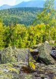 Small tree on stone Royalty Free Stock Image