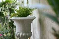 Small tree in the stone pot plant decorated Royalty Free Stock Photo