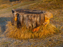 Small tree stump in the garden Stock Photography