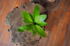 Small tree on wood. Garden Decor royalty free stock images