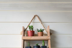 Small tree in woodshelf interior decorate Stock Photos