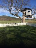 Picture Perfect Lawn and Treehouse With Mountains in Distance royalty free stock photo