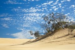 Small trees in desert Royalty Free Stock Photo