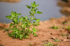 Small trees on the dry ground. Royalty Free Stock Images