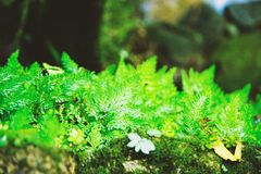 Small trees in the forest are fertile. Green leaves in the forest stock photos