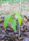 Small trees in the forest. Small plant growing in the wild Stock Photography