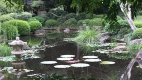 Small trees frame the pond of a landscaped Japanese garden in Australia. stock video