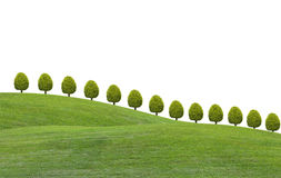 Small trees on green grass hill Stock Photography