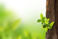 Small trees growing. On the old timber on green background stock images