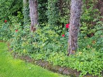Small Trees Growing in Leafy Garden Royalty Free Stock Photo