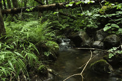Small tributary stream Stock Photography