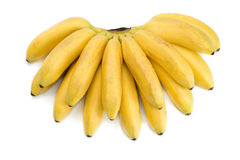 Small tropical banana Royalty Free Stock Image