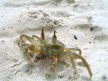 Small tropical hermit crab close up photo stock photo
