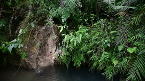 Small tropical jungle waterfall, Java, Indonesia. Small tropical rainy jungle waterfall, Java, Indonesia stock video