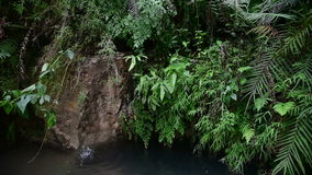 Small tropical jungle waterfall, Java, Indonesia. Small tropical rainy jungle waterfall, Java, Indonesia stock footage