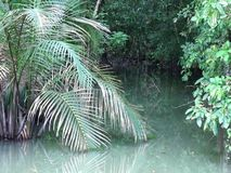 Small tropical lake in the jungle. stock video footage