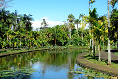 Small tropical lake with palms around. On a botanical garden (Pamplemousses, Mauritius Stock Photos