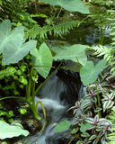 Small tropical stream. Surrounded by tropical plants Royalty Free Stock Images
