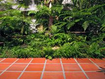 Small tropical urban garden. With paving royalty free stock photo