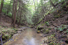 A small Trout Stream. Royalty Free Stock Images
