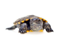 Small turtle Stock Images