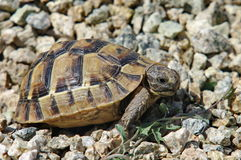 Small turtle. In a hot summer day Stock Images