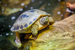 Small turtles in water. In the park Stock Photo
