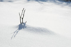 Small twig in the snow with shadow Royalty Free Stock Image