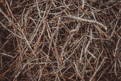Small twigs for the fireplace. Natural wood texture Stock Photography