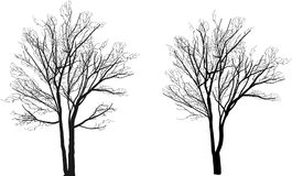 Small two bare isolated tree silhouettes Stock Photo