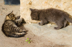 Small two sweet stray kitten Stock Image