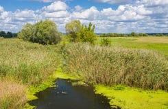 Small Ukrainian river Merla Stock Image