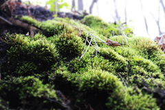 Small unobtrusive forest details Stock Photography
