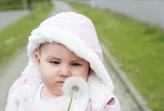 Small upset child, displeased looking at a white  dandelion Royalty Free Stock Images