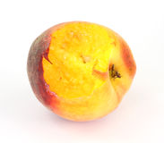 Small utility peach that has one bite eaten Royalty Free Stock Images