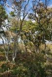 Small Utrish, Caucasus, Russia. Trees juniper Small Utrish Caucasus Black Sea Russia stock image