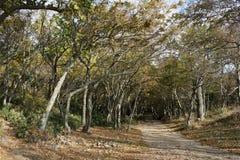 Small Utrish, Caucasus, Russia. Trees juniper Small Utrish Caucasus Black Sea Russia stock photography