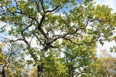 Small Utrish, Caucasus, Russia. Trees juniper Small Utrish Caucasus Black Sea Russia stock photo