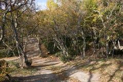Small Utrish, Caucasus, Russia. Trees juniper Small Utrish Caucasus Black Sea Russia royalty free stock image