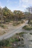 Small Utrish, Caucasus, Russia. Trees juniper Small Utrish Caucasus Black Sea Russia royalty free stock photo