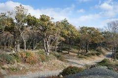 Small Utrish, Caucasus, Russia. Trees juniper Small Utrish Caucasus Black Sea Russia royalty free stock photography
