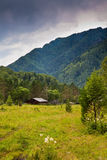 Summer forest with mountain and small cabin Royalty Free Stock Image