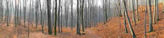 Small valley in autumn beech forest Royalty Free Stock Photos