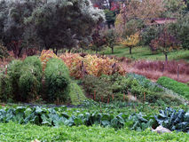 Small vegetable garden in fall various plants Royalty Free Stock Photos