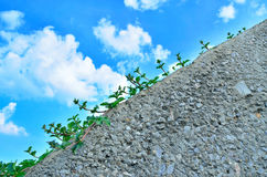 Small vegetation 1. Small vegetation grow up on  the wall and blue sky - horizontal view Stock Images