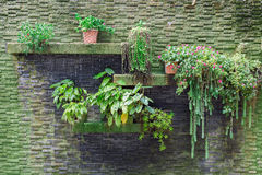 Small vertical garden. With waterfall on stone bricks wall Royalty Free Stock Photos