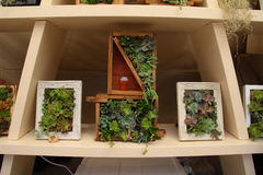 Small vertical gardens, Royalty Free Stock Image