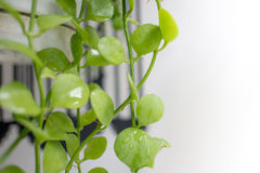 Small vertical green plants. Bring nature close to you by planting small plants royalty free stock photos
