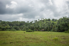 The small village on the edge of the Jungle in the vicinity of B Stock Photos